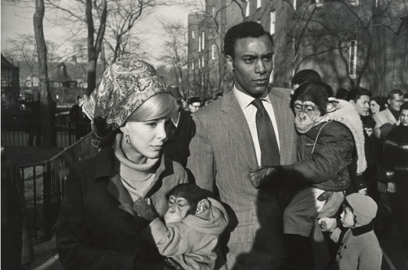 Central Park Zoo, New York 1967 Garry Winogrand Tirage gélatino-argentique. Collection of Randi and Bob Fisher. © The Estate of Garry Winogrand, courtesy Fraenkel Gallery, San Francisco. Photo : Don Ross