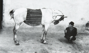 """N°172 - Josef Koudelka (1938) """"Gitan au cheval"""" Roumanie, 1968 Signature et dédicace 35X54 cm Vente 16/10/2015 -Thierry de Maigret - Coll Edouard Boubat"""
