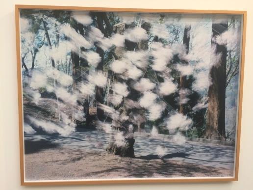 Risaku Suzuki Sakura galerie Christophe Guye ©Thegazeofaparisienne