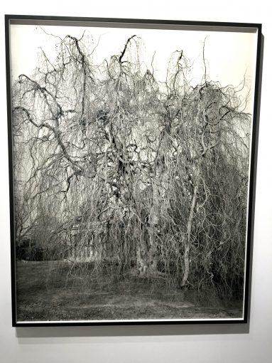 Mitch Epstein Weeping Beech, 2011 Les filles du Calvaire ses bras ses bras @The gazeofaparisienne