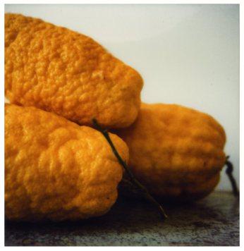 Lemons Gaète 1998 Impression à sec sur carton - 43,1 X 27, 9 Fondazione Nicola del Roscio ©Cy Twombly courtesy archives Nicola del Roscio