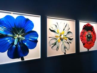 Guido Mocafico - Hamilton Gallery