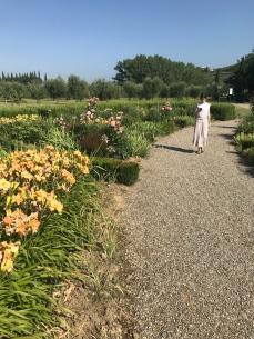 Jardin d'iris - Villa La Massa