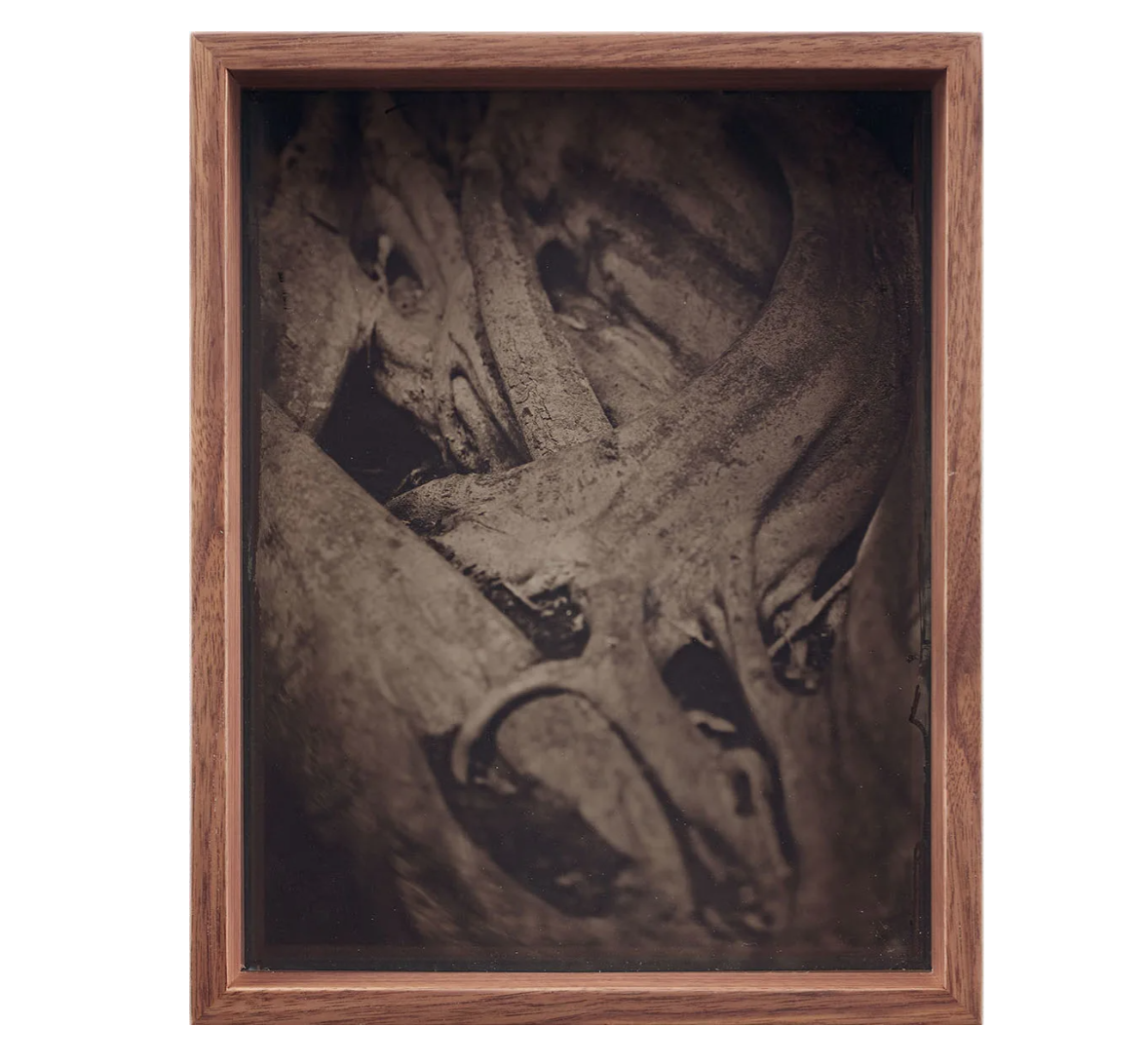MARTÍN SOTO CLIMENT DETAIL (COLLODION 2), 2020 Glass negative with black foil backing and protected with anti-reflective museum glass. Walnut frame 20.5 x 25.5 x 8 cm 8 1/8 x 10 1/8 x 3 1/8 in Photo: Diane Arques